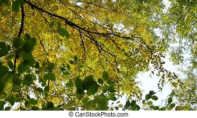 overview of yellowing autumn trees to the sky