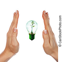 light with a small sprout - Hands girls and light with a...