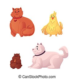 Fat, chubby cat, dog, chicken and hamster