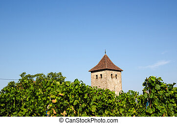 French vineyard in Dambach-la-Ville - French vineyard in the...