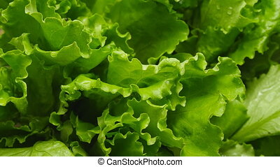 Close-up of salads leaf rotate