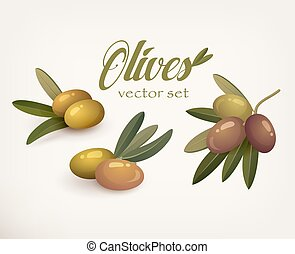 Set of olive branches with stems and leaves. Ripe and raw...