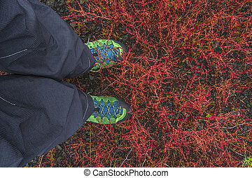 Hiking boots dove into tundra plants at Iceland, summer...
