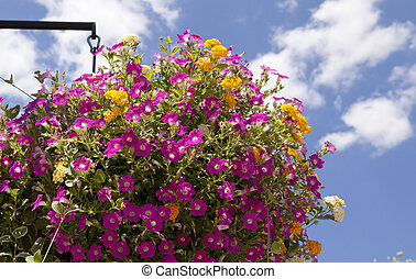 Hanging Planter with Summer Annuals - Hanging planter shot...