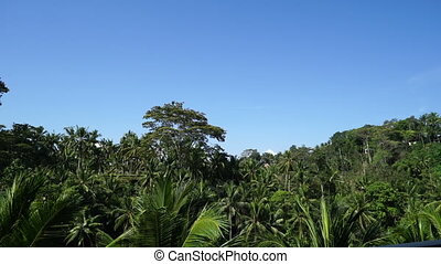 Tropical forest in Bali. - Tropical forest on the background...