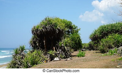 Tropical hill by the sea.