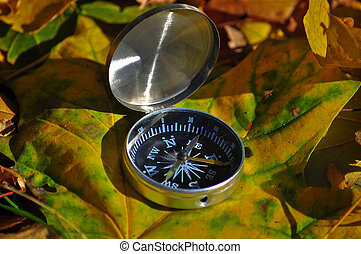 compass on the leaves. - The compass on the leaves. Magnetic...