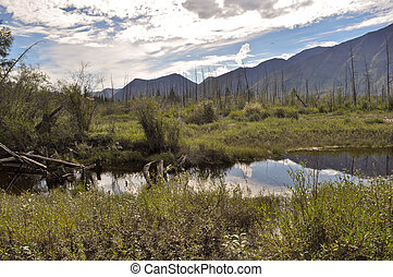 Landscape marshy floodplain of the river. - Mountain river...