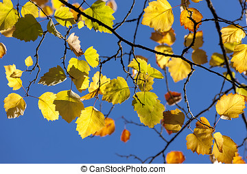 Fall leaves against blue sky.