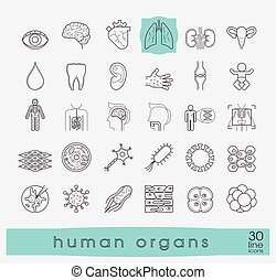Icons presenting various organs of the human body. - Set of...
