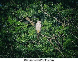 Image of an owl on tree branch. in forest, Thailand. Vintage...