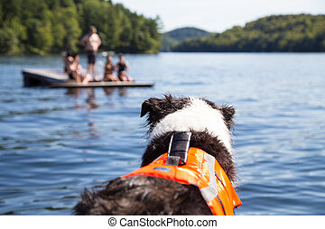 Dog in life jacket watches lake