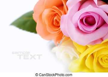 roses - Bunch of multi-colored roses over white. Selective...