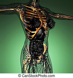 science anatomy of human body in x-ray with glow skeleton...