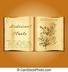 Greater celandine. Botanical illustration. Medical plants....