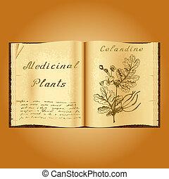 Greater celandine. Botanical illustration. Medical plants....