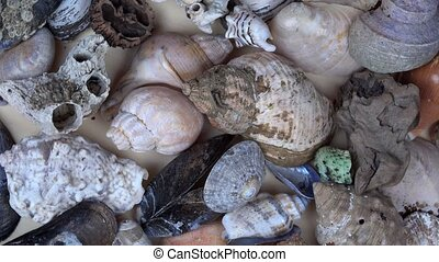 Collection of seashells shell conch cockleshell for...