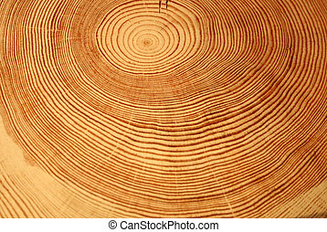 Year rings of a tree - Closeup of circle patterns of a cut...