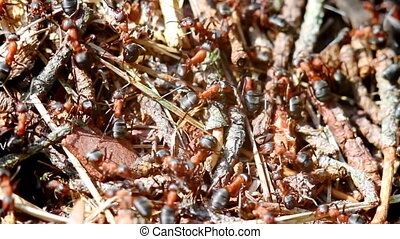 Ants building anthill