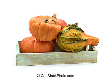 different pumpkins in a tray - a rustic wooden tray with an...