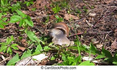 snail eat grass