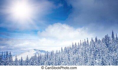 WInter Landscape. 4k, 25fps - Winter landscape with pine...