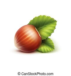 Full Unpeeled Hazelnut with Leaves Close up - Vector Full...