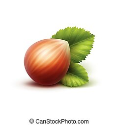 Full Unpeeled Hazelnut with Leaves on Background - Vector...