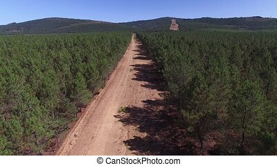 Fliying over firebreak with pine tree forest - Aerial view...