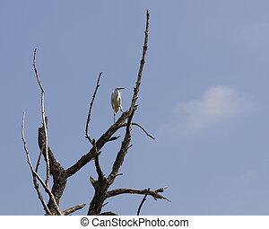 white heron on tree