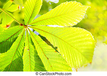 Yellow leaf of chestnut closeup - autumn background. Shallow...