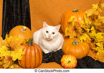 Halloween Cat - A white cat sits among autumn leaves and...