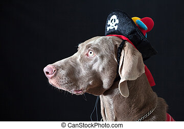 Canine pirate wearing a hat