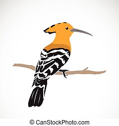 Vector of hoopoe on white background. Eurasian hoopoe (Upupa...