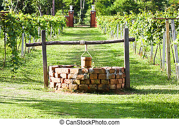 Water-well in grape field - Water-well at between the line...