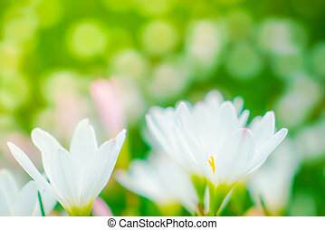 Beautiful White bunch flowers on green grass background -...