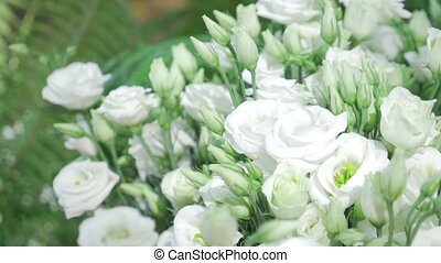 Fresh white roses with green leaves- nature spring sunny background. Soft focus and bokeh