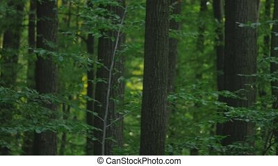 view inside of the forest on the trees panorama