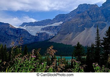 Sunlit grass against dark mounains. - Lake Peyto. Banff...