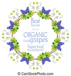 Super grape frame