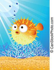 Pufferfish - Puffer fish