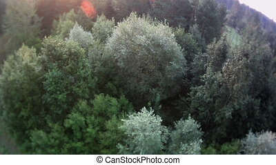 Forest landscape aerial view. - Russian forest and river...