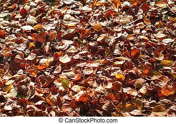 Dark orange fallen autumn leaves background