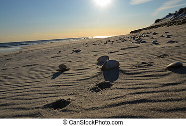 playa, con, arena, algunos, ocaso, conchas