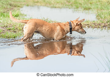 reflection in water - small dog and its reflection in a pool...