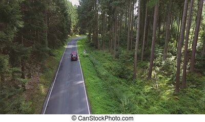 Country road in green sunny coniferous forest. Netherlands....