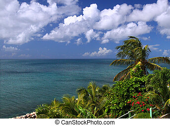 The Caribbean island of Saint Kitts - Tropical vegetation...