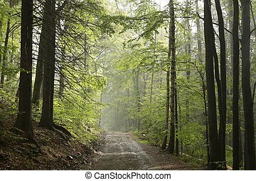 Early autumn forest after rainfall - Trail through early...