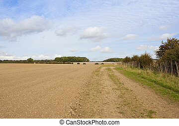 cultivated soil with hedgerow - a cultivated field with...