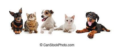 group of puppies and cats on a white background